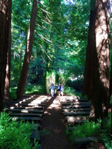 Showing off the beautiful Cathedral of the Redwoods to Mom and Dad