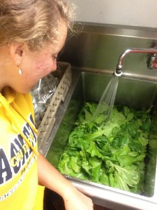 Don't mind me, just cleaning the lettuce grew and picked.