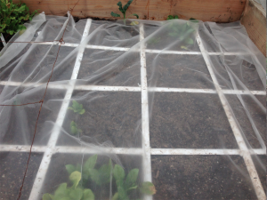 Floating row cover to keep the soil warm for the spinach, kale, and lettuce seeds.