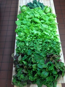 One harvest of lettuce, spinach, kale, and beet greens!