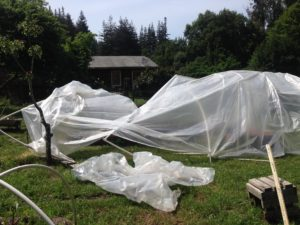Hoop House Knock Out #2